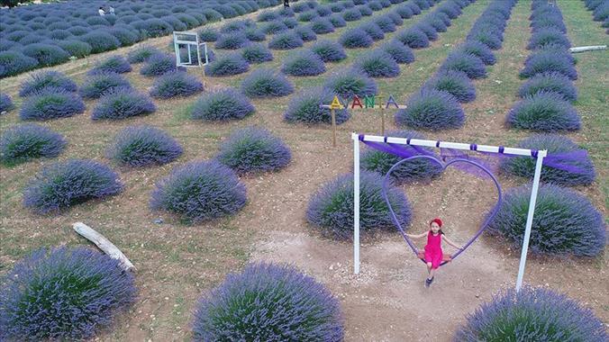 Bir Çiçek Bir Köyün Kaderini Değiştirdi