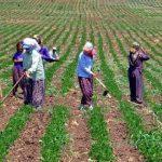 Kadınlar Tarımın En Değerli Dinamiğidir